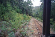 Train tracks in Pemberton Western Australia - picture from tram.