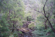 Woods forest photo in Western Australia with Stream.