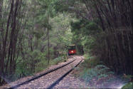 Train coming at you from the woods. Photo Pemberton tram.